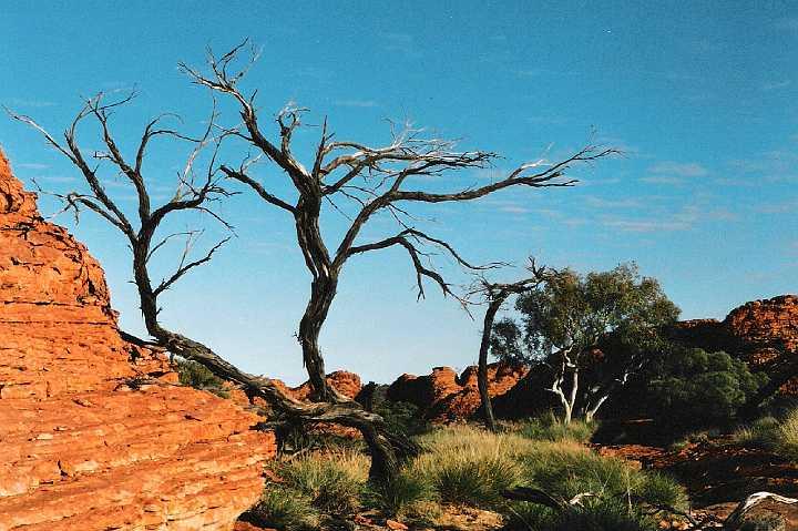 Les défis Botaniques de Shiemi :) Desert